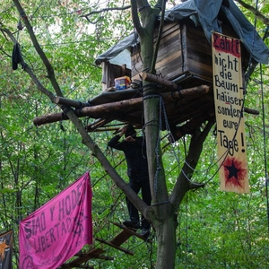 Police use force to remove anti-coal mining protestors in German forest