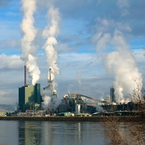 Government Ends Plans to Build Pulp Mill Following Protest
